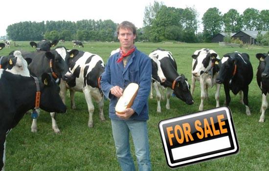 Te koop, zooitje koeien en wat kaas