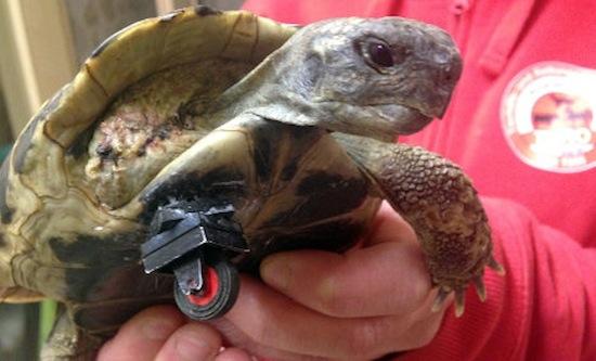 Lego wiel schildpad