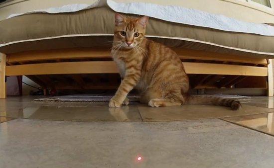 Poes en laserpointer