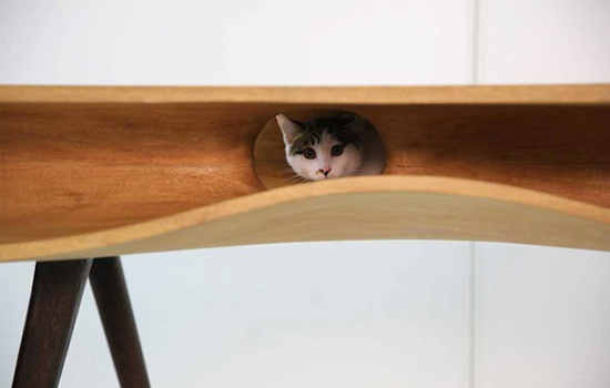 CaTable: een bureau speciaal voor je kat