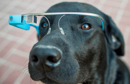 Google Glass voor je speurhond