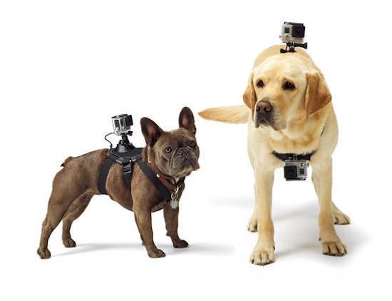 Met de GoPro Fetch leg je het leven van je hond vast