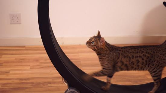 One Fast Cat: een hamsterwiel voor katten
