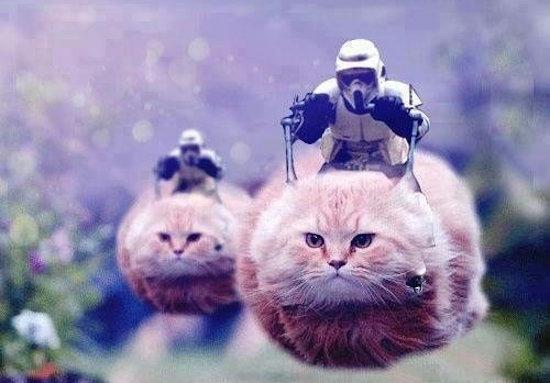 Om de politie te helpen posten Belgen massaal kattenpics