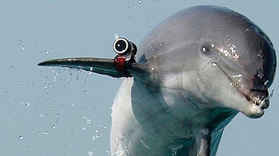 Dolphin spy