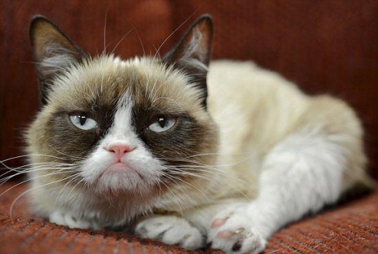 Grumpy Cat Foto