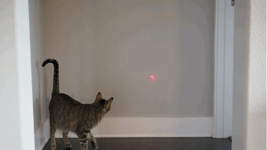 Obi: laserspeelgoed voor je kat