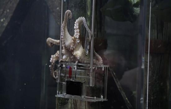 Octopus klust bij als fotograaf