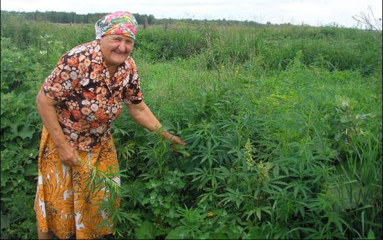 Russia weed