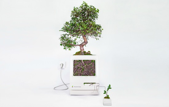 Apple plantenpot