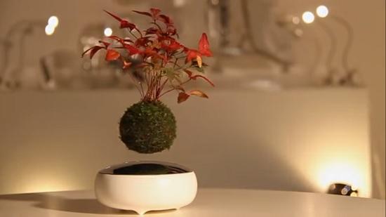 Bonsai zwevend