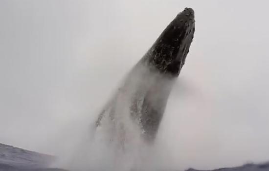 Walvis verplettert bijna duiker