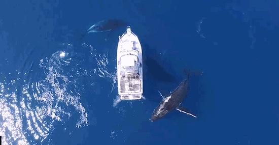 drone walvissen bood