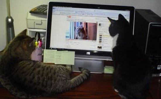 YouTube katten