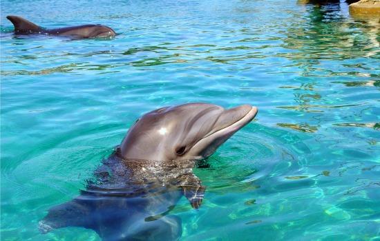 Een dolfijn in betere toestand