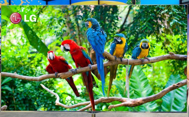 Zelfs de papegaaien staan ervan te kijken... Zo scherp?!