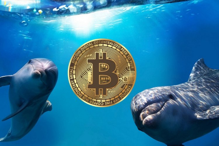Bitcoin-whales-verplaatsen-miljoenen