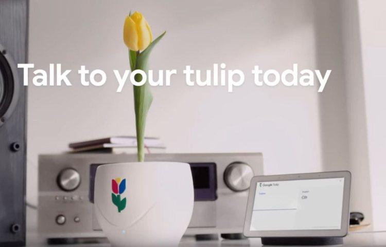 Google-tulp