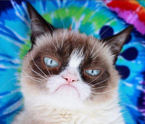 Grumpy-cat-is-niet-meer