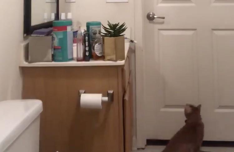 Dit filmpje van een kat die een deur opent gaat viral