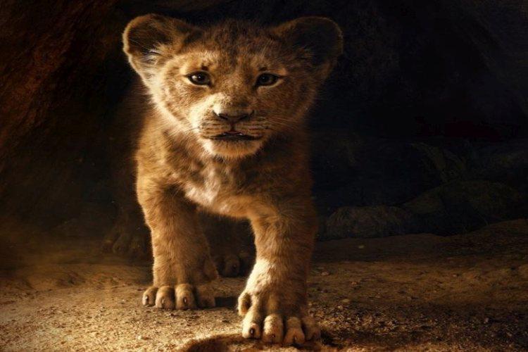 the-lion-king-nederlands-live-action