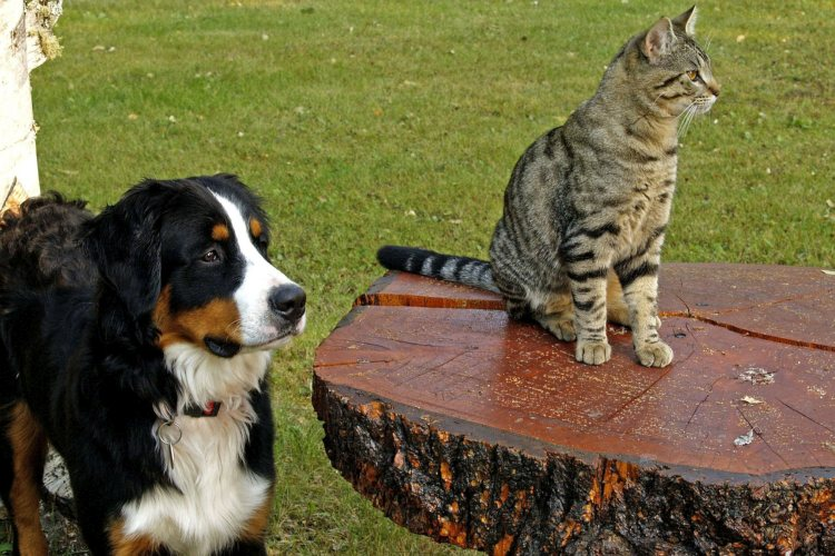 video-chat-hond-kat